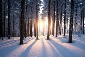 wintersols